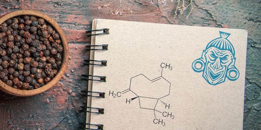 Was ist β-Caryophyllen?