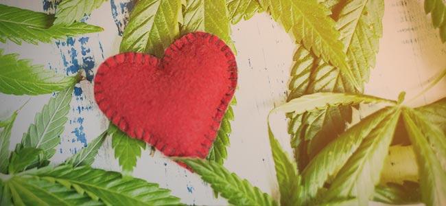 Du entwickelst eine Beziehung zu der cannabis-Pflanze