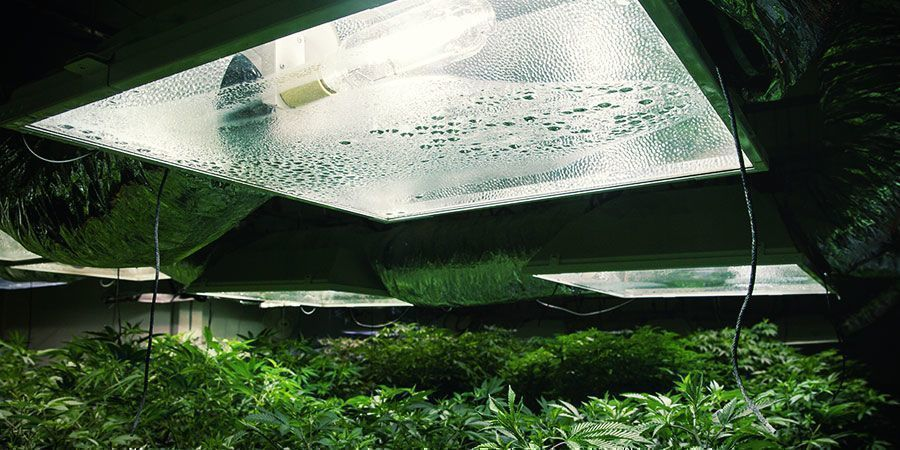 Überprüfe Deine Ausrüstung - Cannabispflanzen