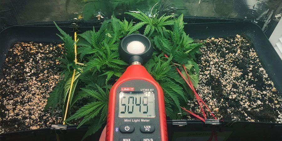 Verwende Ein Lux- Oder PAR-messgerät - Cannabispflanzen