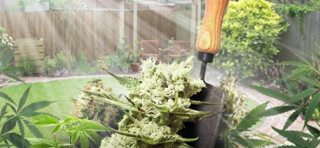 Anbauen Im Garten Oder Hinterhof
