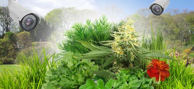 Tipps Für Garten-grower