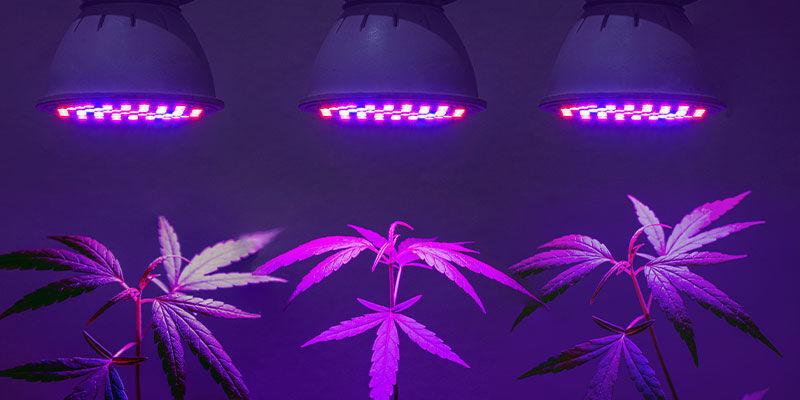 Benötigt Man Spezielle UV-lampen Für Cannabis?