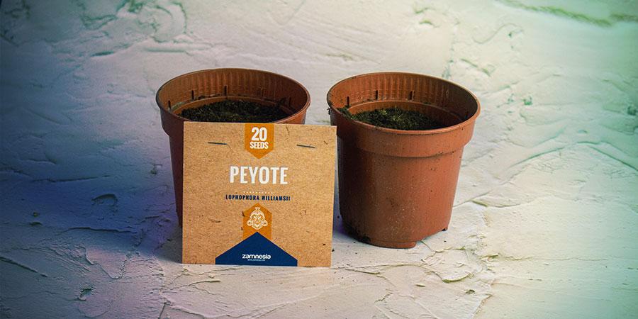 Pflanze Die Meskalinkaktus-Samen