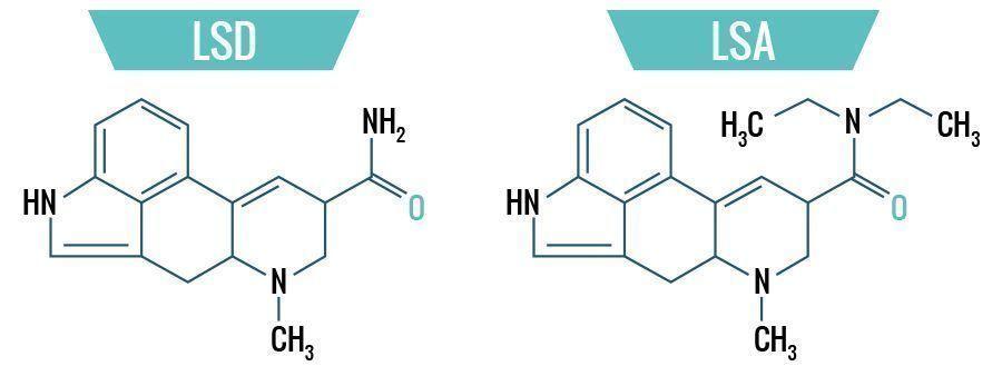 LSD & LSA