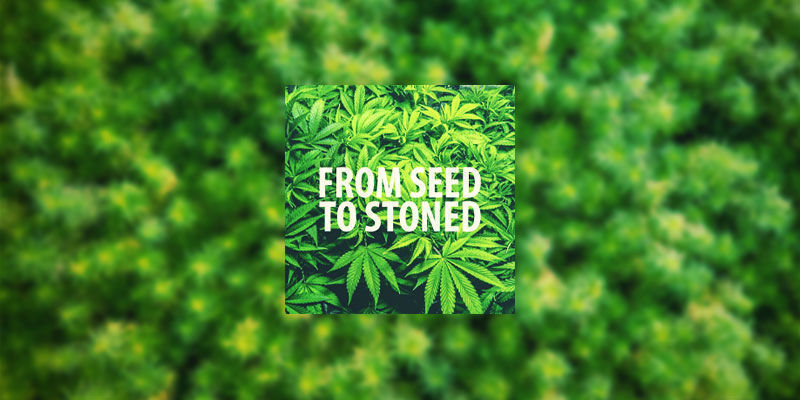 From Seed To Stoned | Youtube