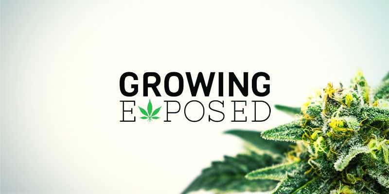 Growing Exposed | Youtube