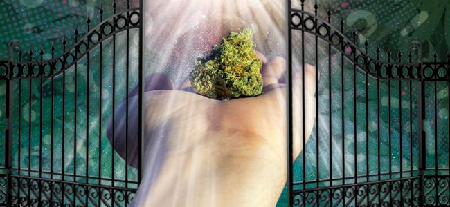 Marihuana Ist Eine Einstiegsdroge Zu Härteren Drogen