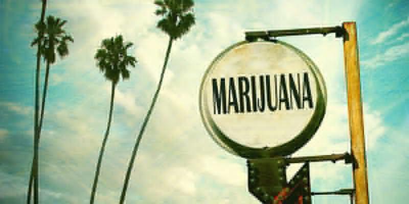 OG Kush Cannabis: In Florida geboren und gezüchtet?