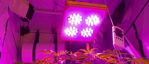 ein blick auf die besten pflanzenlampen f r hanf zamnesia blog. Black Bedroom Furniture Sets. Home Design Ideas