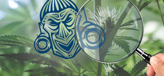 Überwache Deine Pflanzen