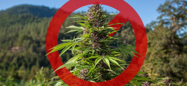 Verbotene außerhalb Wachstum Cannabis