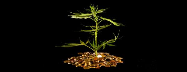 Cannabis kostengünstig