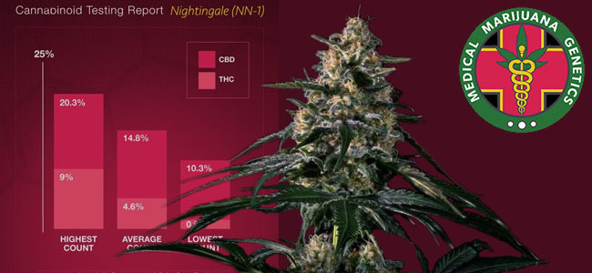 Nightingale Medical Marijuana Genetics