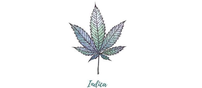 Cannabis Indica