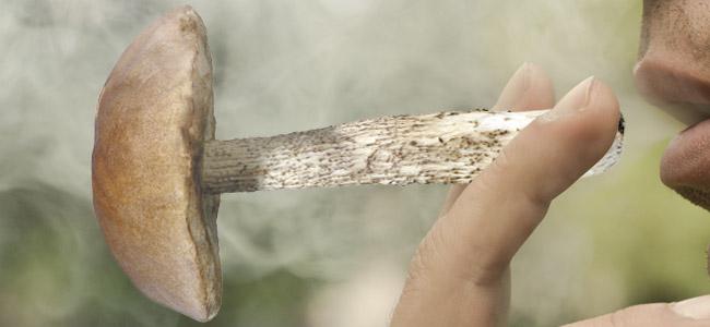 Giant Magic Mushroom