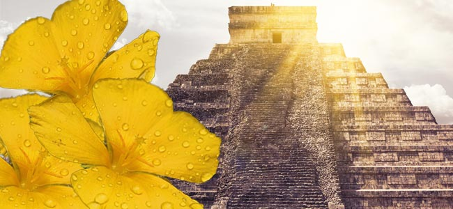 Anwendung Bei Den Maya