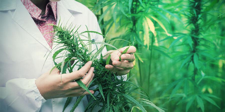 Kann Man Mit Cannabis Schmerzen Behandeln?