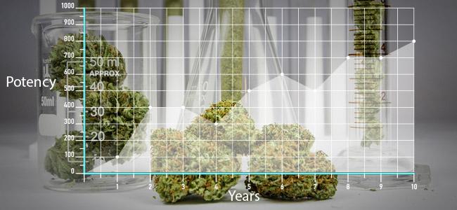 Marihuana Ist Heutzutage Potenter Als In Der Vergangenheit