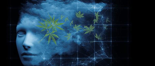 Cannabis Träume