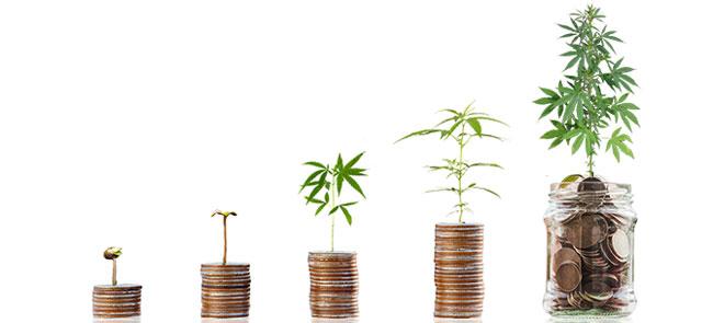 Wachsender deutscher Cannabismarkt