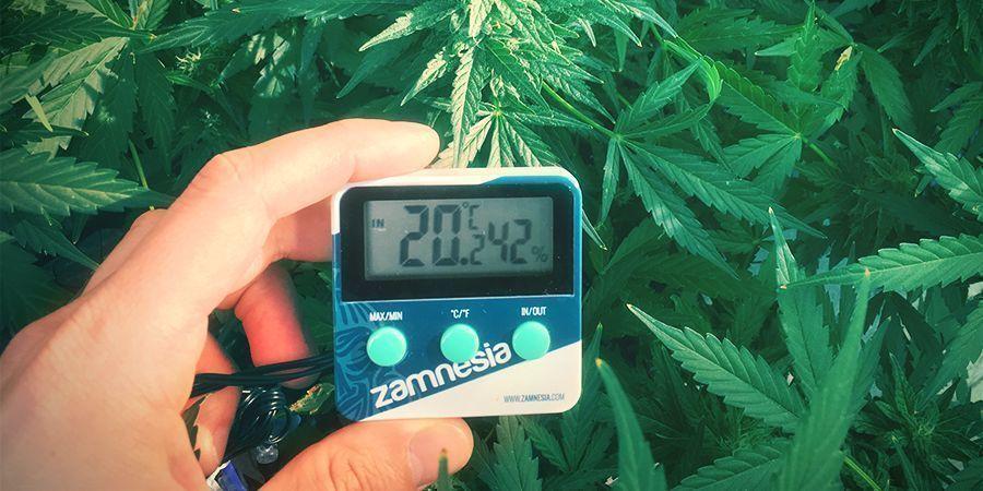 cannabis Anbauraum