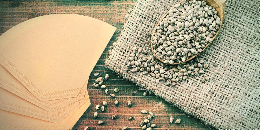 Keimung Deiner Cannabisamen: Kaffeefilter
