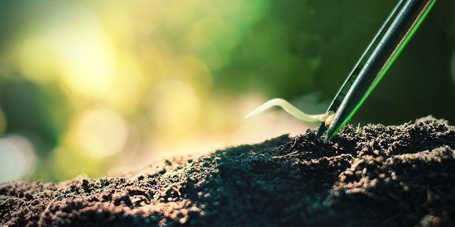 Das Umpflanzen Gekeimter Cannabissamen