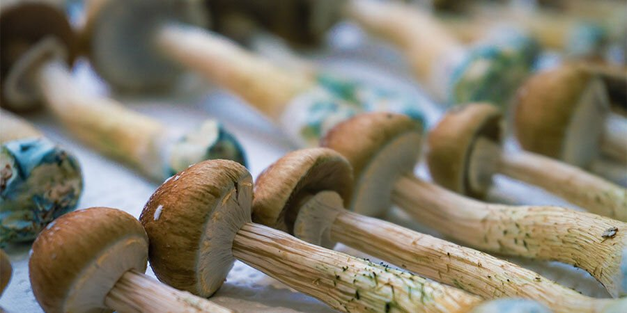 Wie Man Magic Mushrooms Einnimmt