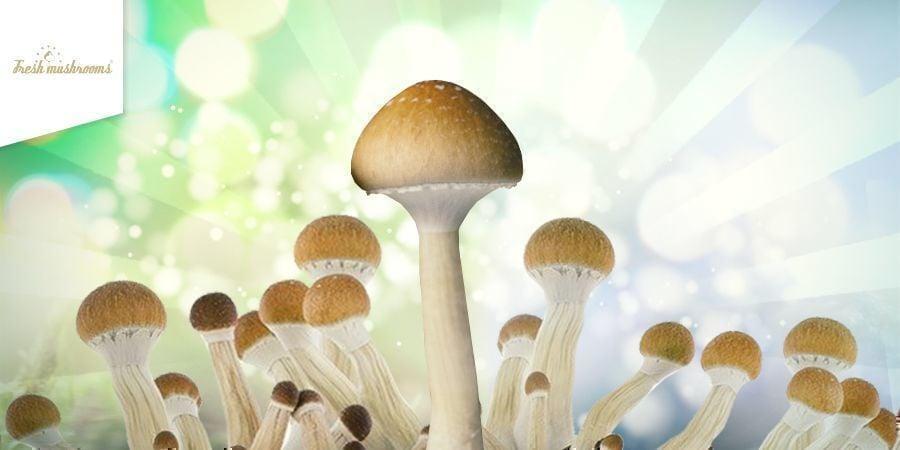 Fresh Mushrooms Grow Kit HEADER CMS