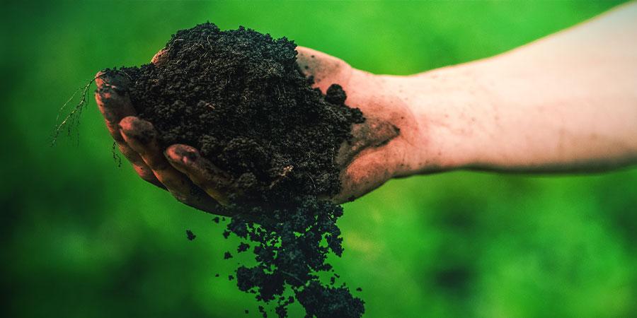 Der beste Boden für den Anbau von Kratom