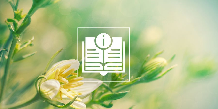 Peganum Harmala: Alles Was Du Wissen Musst