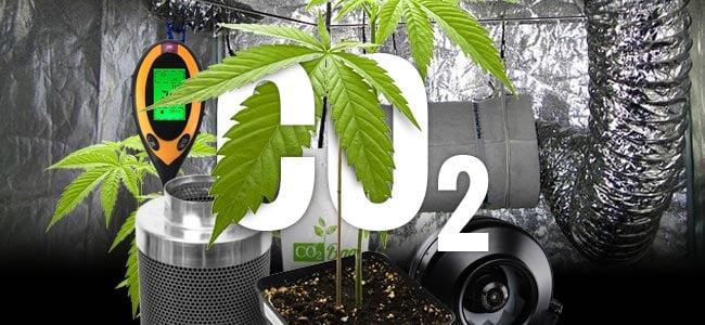 CO₂ Und Cannabis
