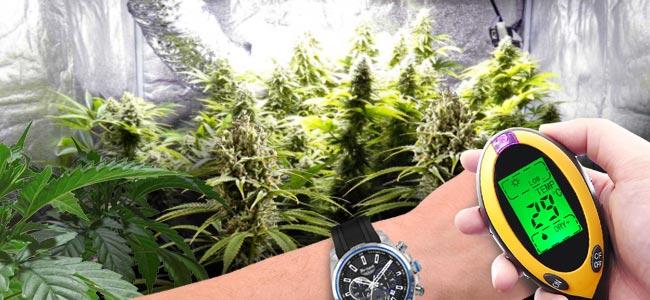 Die Positiven Wirkungen Von CO₂ Auf Cannabispflanzen