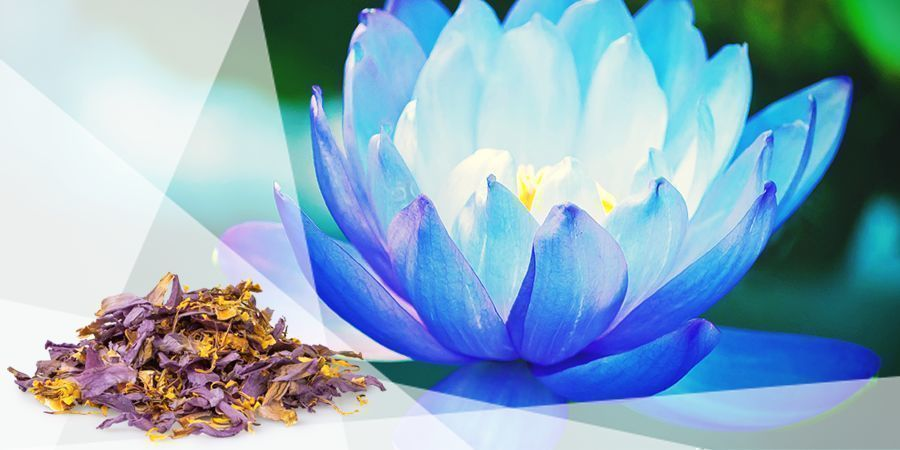 Blauer Lotus - Kräuter Zum Verdampfen Für Gute Laune