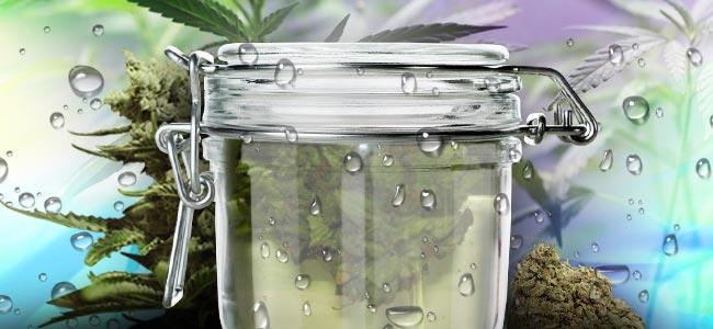 Wasser-Aushärtung von Cannabis