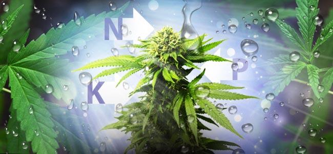 NPK Verhältnis für den Cannabisanbau