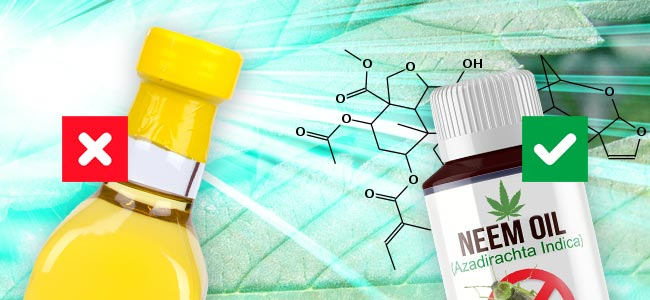 Cold-pressed Neem Oil Vs. Neem Oil Extract