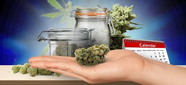 Cannabis Aufbewahren