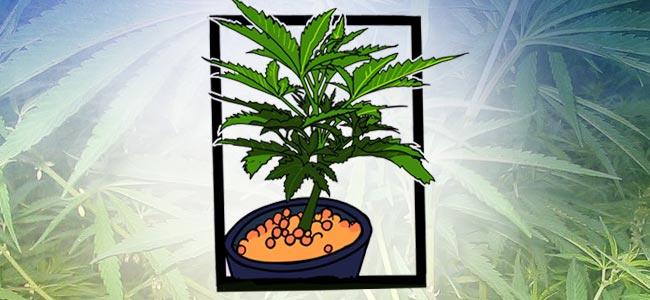Mail-lining: Lass Die Pflanze Bis Zu Sechs Nodien Aufwachsen