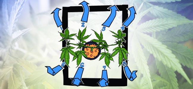 Mail-lining: Binde Die Pflanze Weiter Horizontal