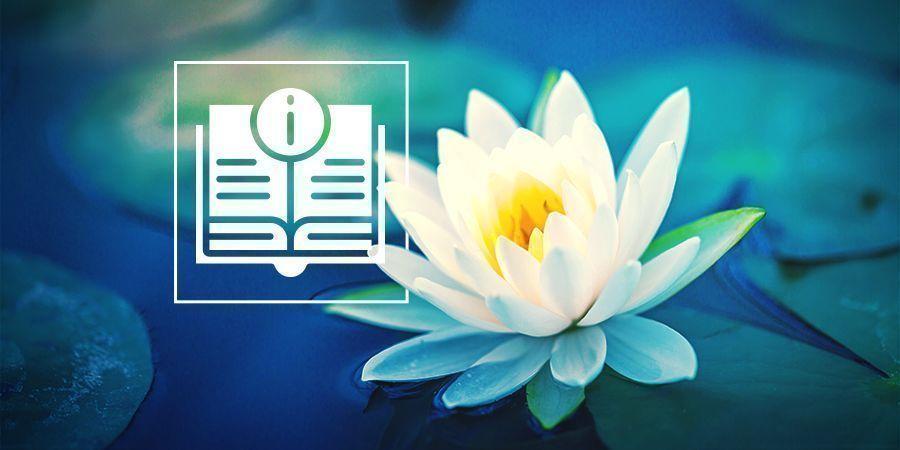 Alles, Was Du Über Weißen Lotus Wissen Musst