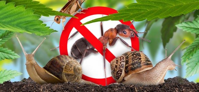 Nervige Käfer & Insekten