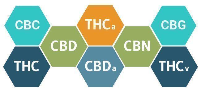 Cannabinoide cannabis