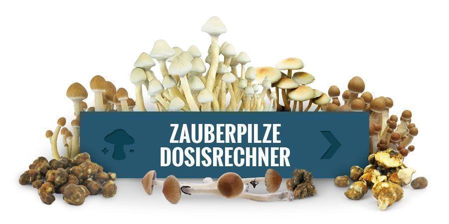 Dosierungsrechner für Magic Mushrooms