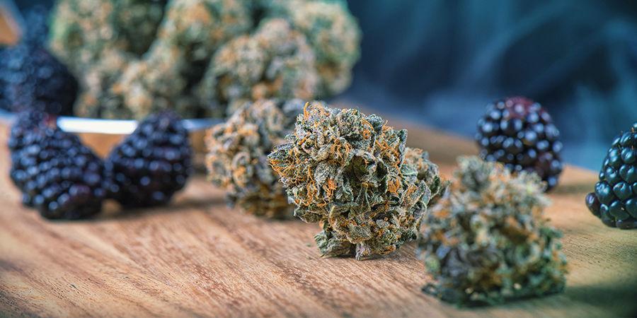 Cannabis-Seedfinder: Cannabisaromen
