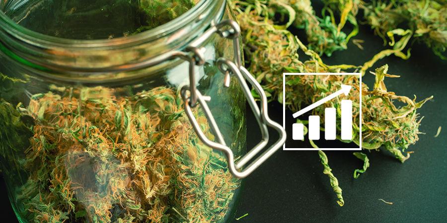 Cannabis-Seedfinder: Ein Hinweis Zu Den Cannabiserträgen