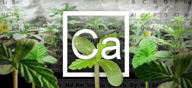 Kalzium Und Cannabis Pflanzen