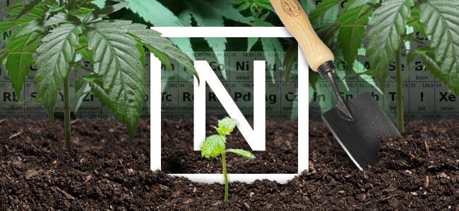 Stickstoff Und Cannabis Pflanzen