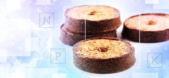Kokos Und Nährstoffe